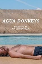 Agua Donkeys