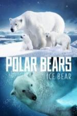 Polar Bears: Ice Bear