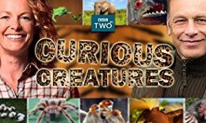 Curious Creatures: Season 2