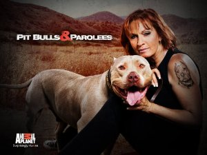 Pit Bulls And Parolees: Season 8