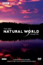 Natural World: Season 34