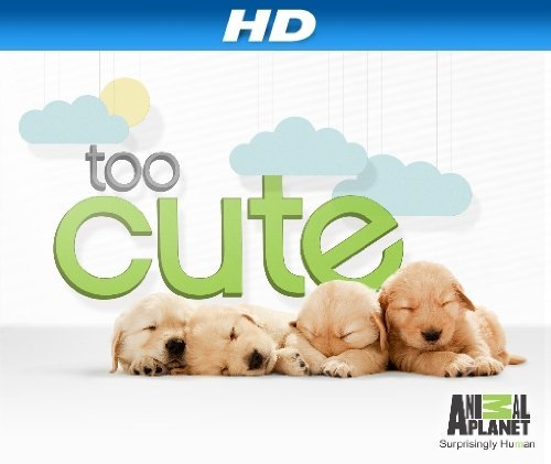 Too Cute!: Season 3