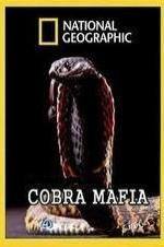 National Geographic Cobra Mafia