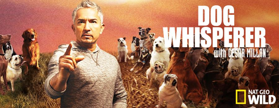 Dog Whisperer With Cesar Millan: Season 8