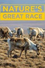 Nature's Great Race: Season 1